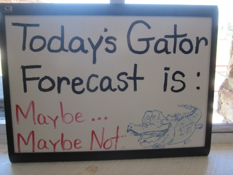 Gator Forecast