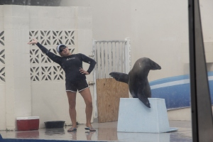 Sea lion waves!